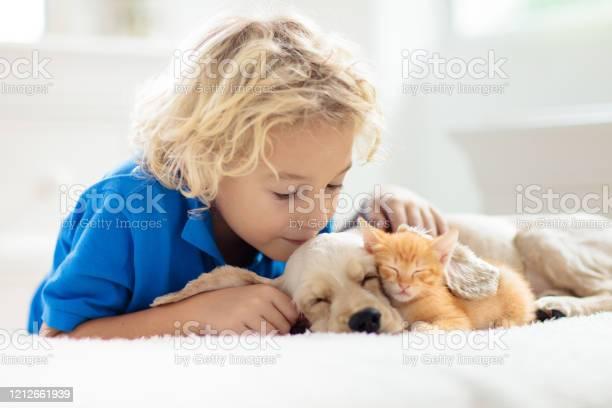 Child dog and cat kids play with puppy kitten picture id1212661939?b=1&k=6&m=1212661939&s=612x612&h=ehk6knlbnpskdlon1ykazspxevwunwfm8dvr5cvcpbe=