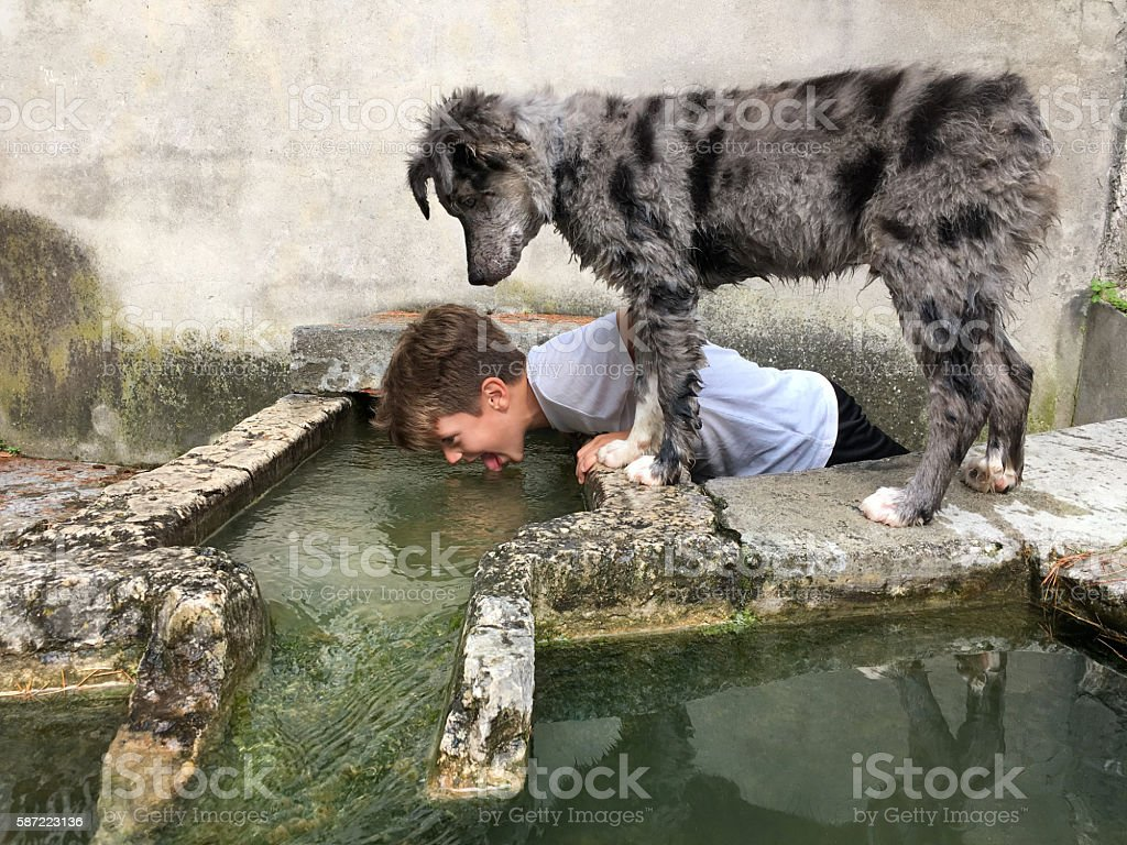 Child drinks like a dog stock photo