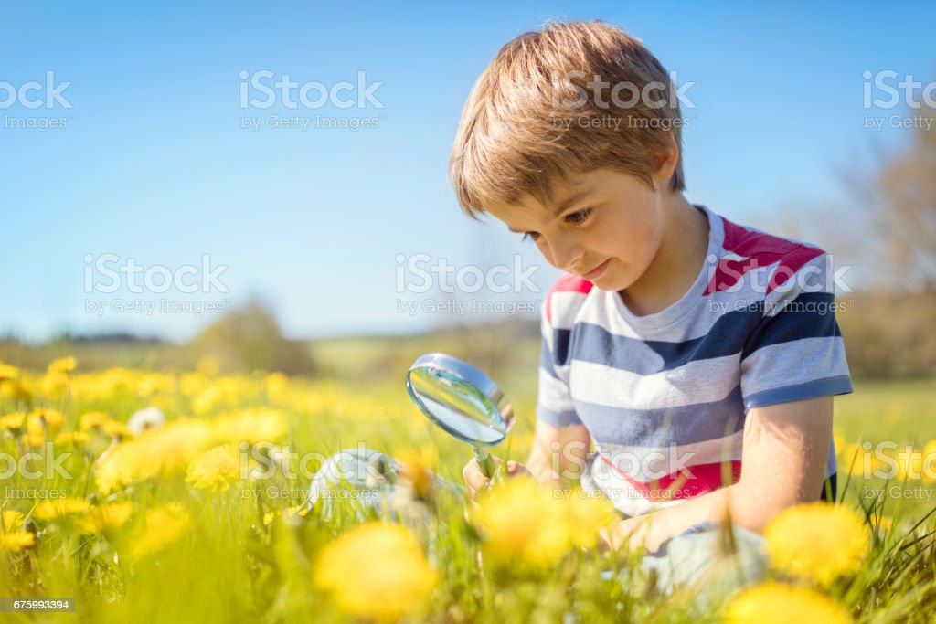 Child exploring nature in a meadow stock photo