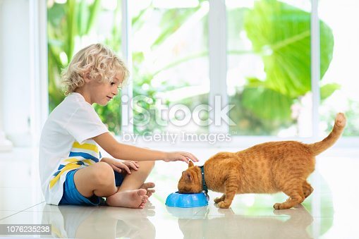 istock Child feeding home cat. Kids and pets. 1076235238