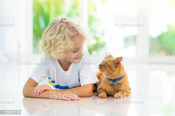 Child feeding home cat kids and pets picture id1126512139?b=1&k=6&m=1126512139&s=612x612&h=p0qdxtr2 pcjyscdddygr1hgzt6ah5iwgfheuo9h3p4=