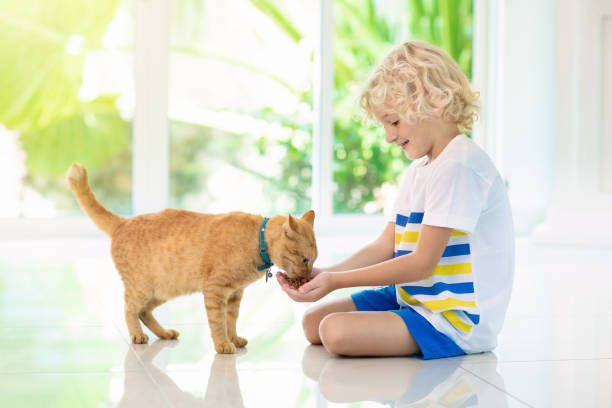 Child feeding home cat kids and pets picture id1177226541?b=1&k=6&m=1177226541&s=612x612&w=0&h=trwkz2jqqjnhkdecix082xvysra1 awncncc3c40niy=