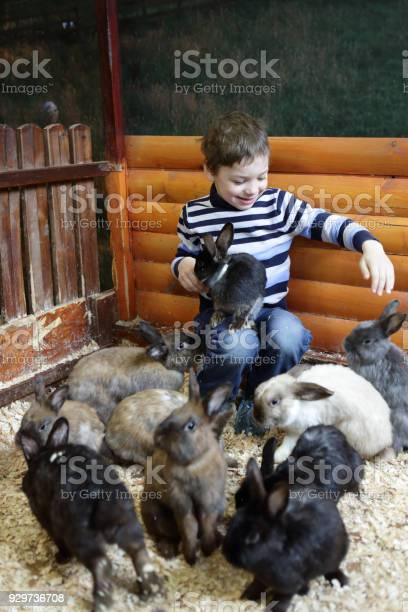 Child feeding rabbits picture id929736708?b=1&k=6&m=929736708&s=612x612&h=6rpoj5lbgtv1dxc0b4gnm230o9knc4asl2dpmsozmpa=