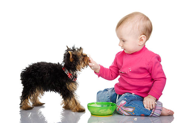 Child feeds a puppy picture id153466993?b=1&k=6&m=153466993&s=612x612&w=0&h= i7hnuymge5e15naxtkz1ipkyl3tkmz8 cxjj2x9qxk=