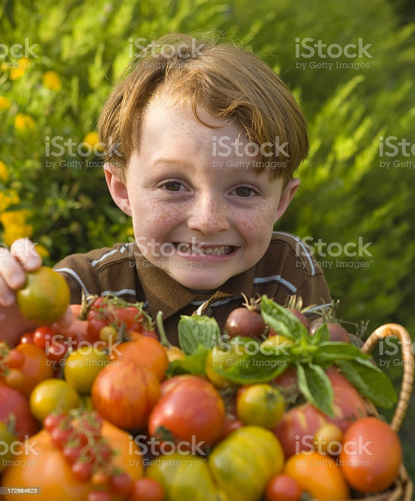 Child Gardener with Homegrown Heirloom Tomatoes, Garden Vegetables royalty-free stock photo