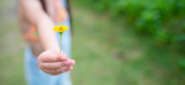 barn ger gul blomma - omsorg bildbanksfoton och bilder