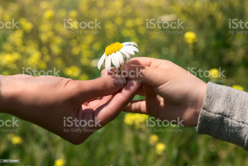 child giving a flower to his mother stock photo more pictures of