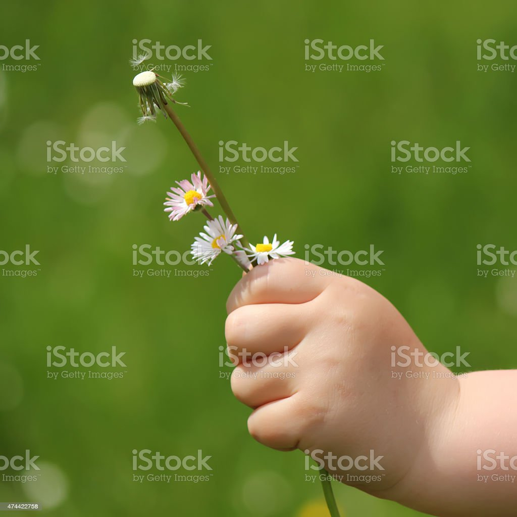 Child hand holding spring flowers stock photo