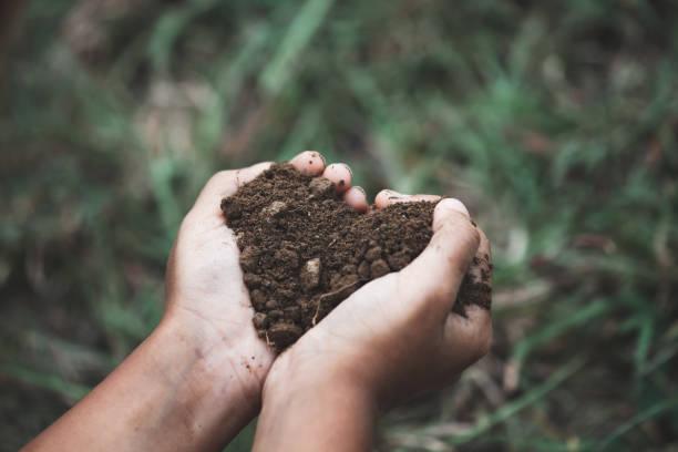 Kinderhand hält den Boden in der Herzform bereiten für die Pflanzung des Baumes – Foto