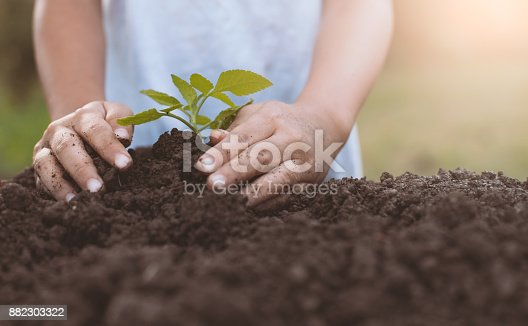 istock Child hand planting young tree on black soil as save world concept 882303322