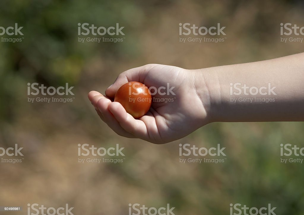 Child hand with tomato royalty-free stock photo