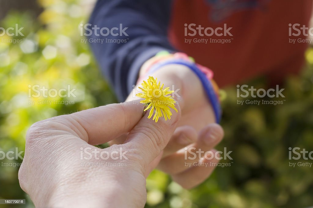 Child Handing Dandelion Flower To Mother royalty-free stock photo