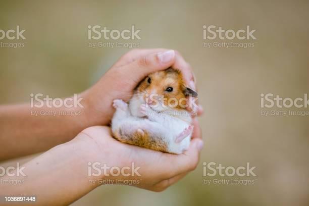 Child hands holding a dwarf hamster picture id1036891448?b=1&k=6&m=1036891448&s=612x612&h=h9cu 2e hxjvgj kfkesciv jodzhzk6txo3pqhnazw=