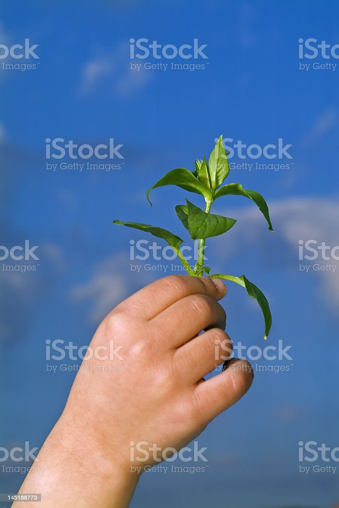 child hands holding plant royalty-free stock photo