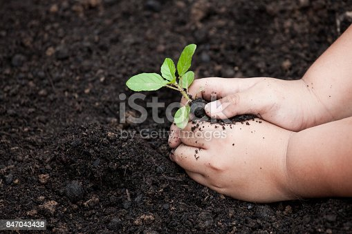 istock Child hands planting young tree on black soil 847043438
