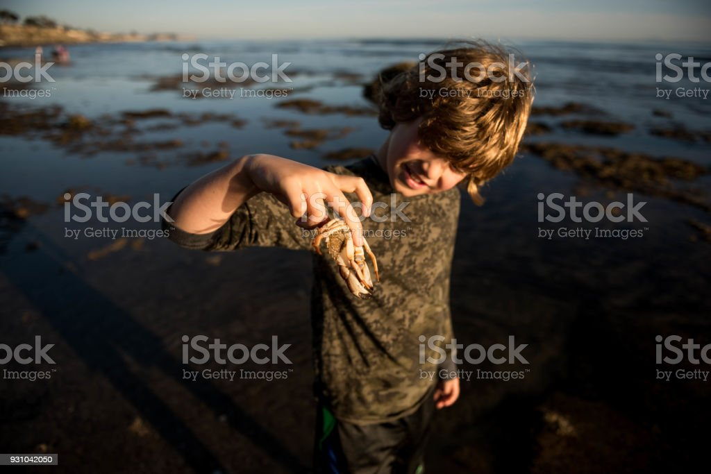 Child holding a crab at sunset stock photo
