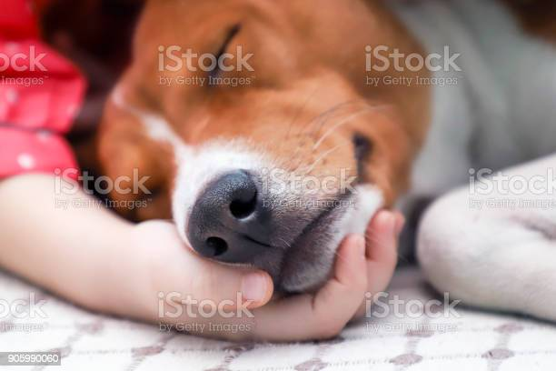 Child holding a dogs head close up picture id905990060?b=1&k=6&m=905990060&s=612x612&h=duq0va4sn1 8z8zd027uvjszwjml k6diiahqf4zckw=