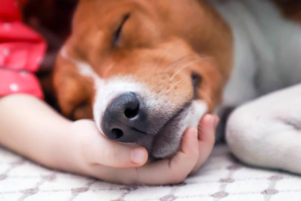 Child holding a dogs head close up picture id905990060?b=1&k=6&m=905990060&s=612x612&w=0&h=4tiqsc0hlmhsqpoqqvuffytvvkpabdc4hl8mmawn2em=