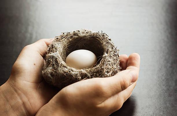 Child holding a nest stock photo
