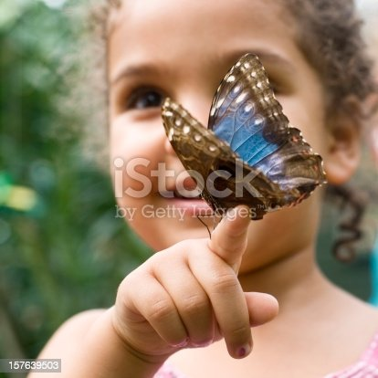 Child, aged 4 years old, is holding a  Butterfly Speckled Wood ( Pararge aegeria ) in a butterfly house.