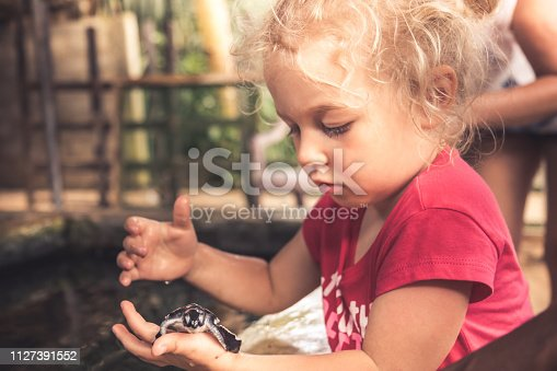 Child holding carefully sea turtle in turtle farm nursery concept for wild animal care and wildlife protection