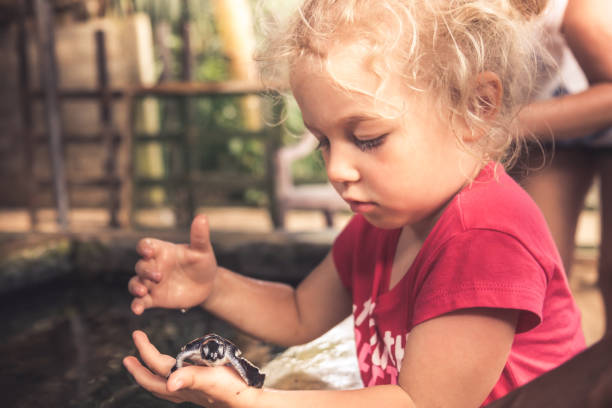 Child holding carefully sea turtle in turtle farm nursery concept wild animal care and wildlife protection stock photo