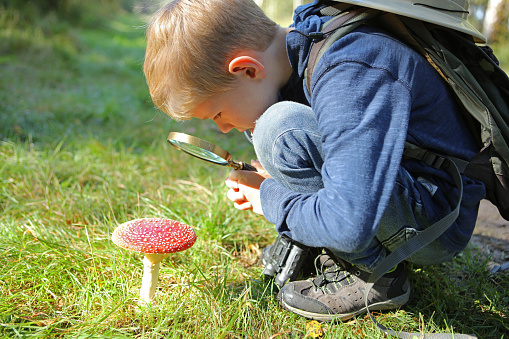 istock Child Holding Magnifying Glass Looking at Fly Agaric Mushroom 491245620