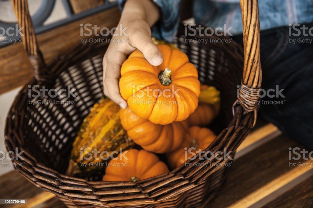 A Child Holding Orange Pumpkin in His Hand stock photo