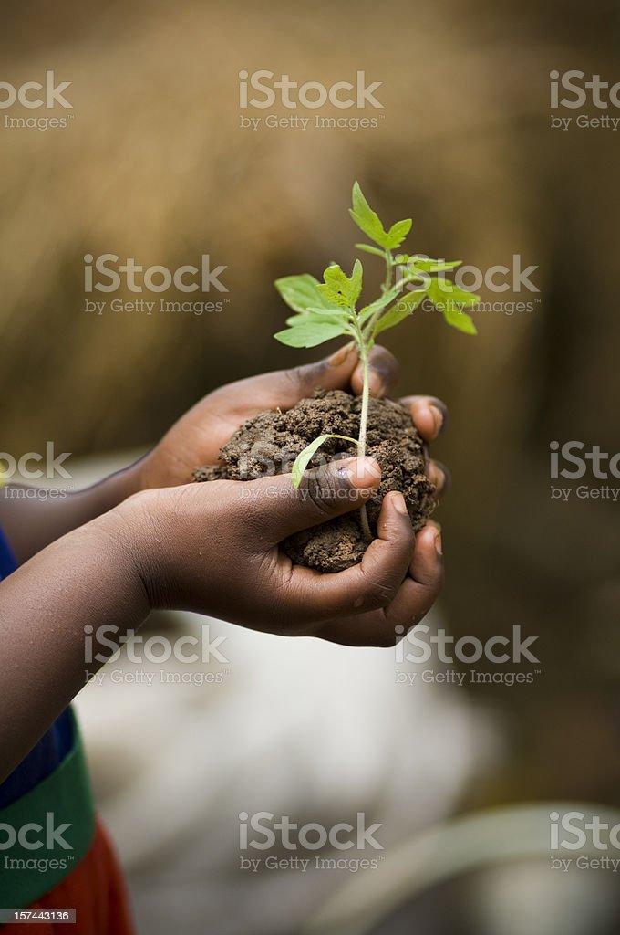 Child holding plant foto