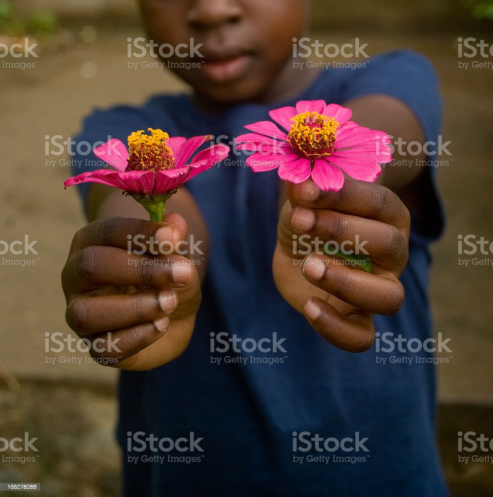 child holding two pink zinnia flowers outdoors royalty-free stock photo