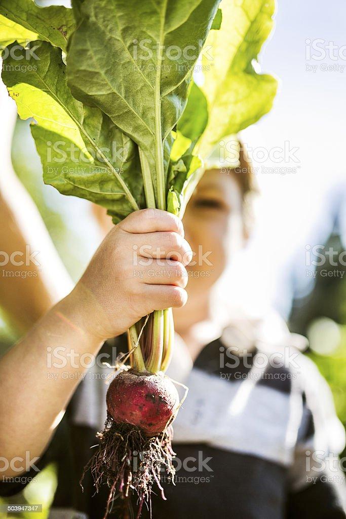 Child Holding Up Beet Plant stock photo