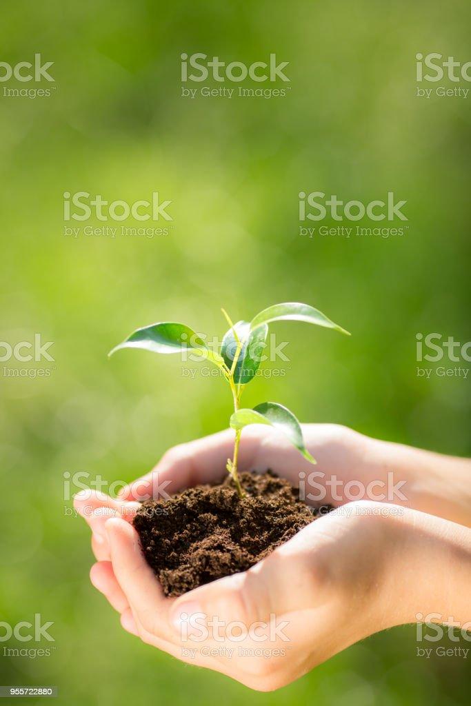 Kind in Händen hält, junge Pflanze – Foto