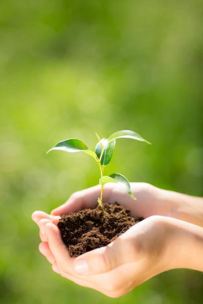 Criança segurando a jovem planta nas mãos - foto de acervo