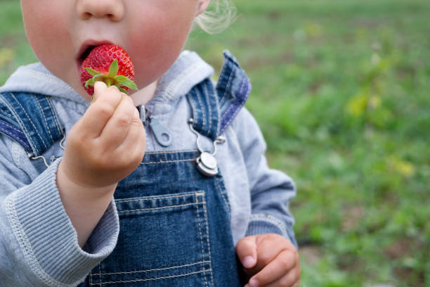 Child in denim overalls eats strawberry on a sunny day Child in denim overalls eats strawberry on a sunny day bib overalls boy stock pictures, royalty-free photos & images