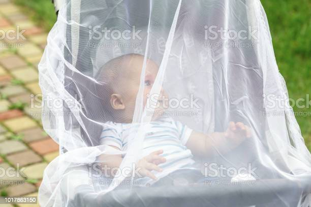 Child in stroller covered with protective net during walk baby with picture id1017863150?b=1&k=6&m=1017863150&s=612x612&h=qf2mfe6kpgqizjsgaqehhk7yjszdc1iujhxx5gzgumg=