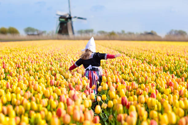 kind in tulp bloem veld. windmolen in nederland. - netherlands stockfoto's en -beelden