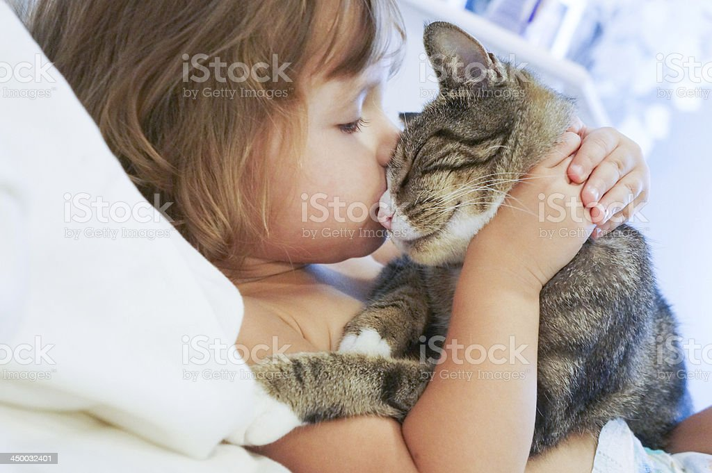 Child is kissing a cat stock photo