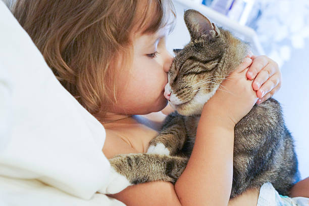 child is kissing a cat - animal stock pictures, royalty-free photos & images