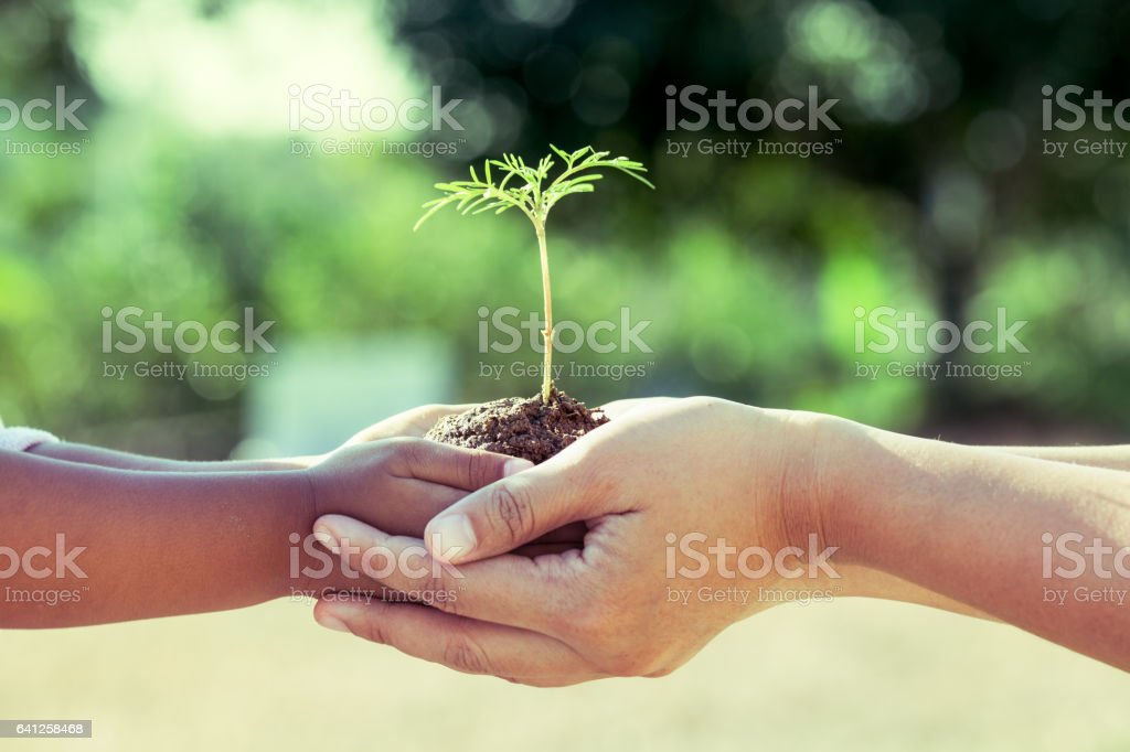 Child little girl and parent holding young plant in hands stock photo