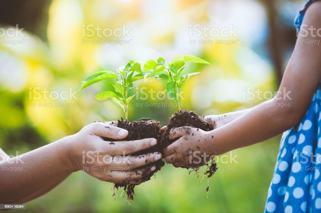Niño niña y padres con jóvenes de la planta en manos juntos - foto de stock
