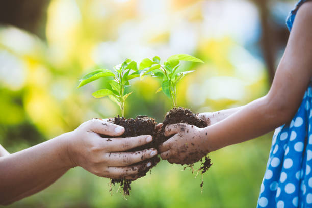 Child little girl and parent holding young plant in hands together stock photo