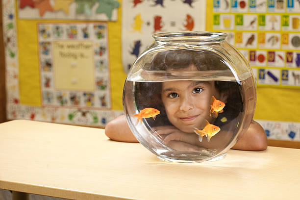 Child looking through a fish bowl stock photo