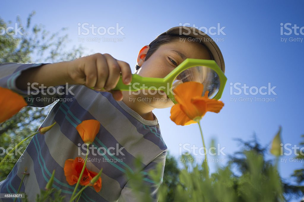Child observing nature with magnifying glass in a garden stock photo