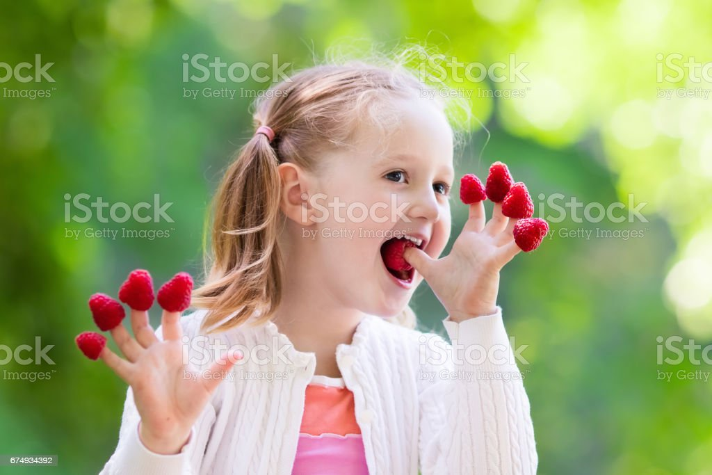 Child picking and eating raspberry in summer stock photo