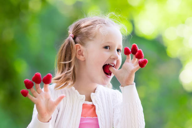Child picking and eating raspberry in summer - Photo