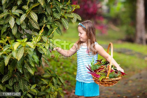 Child picking colorful autumn leaves in basket. Kid playing with tree leaf outdoor. Kids play in warm autumn rain. Fall and foliage fun for children.