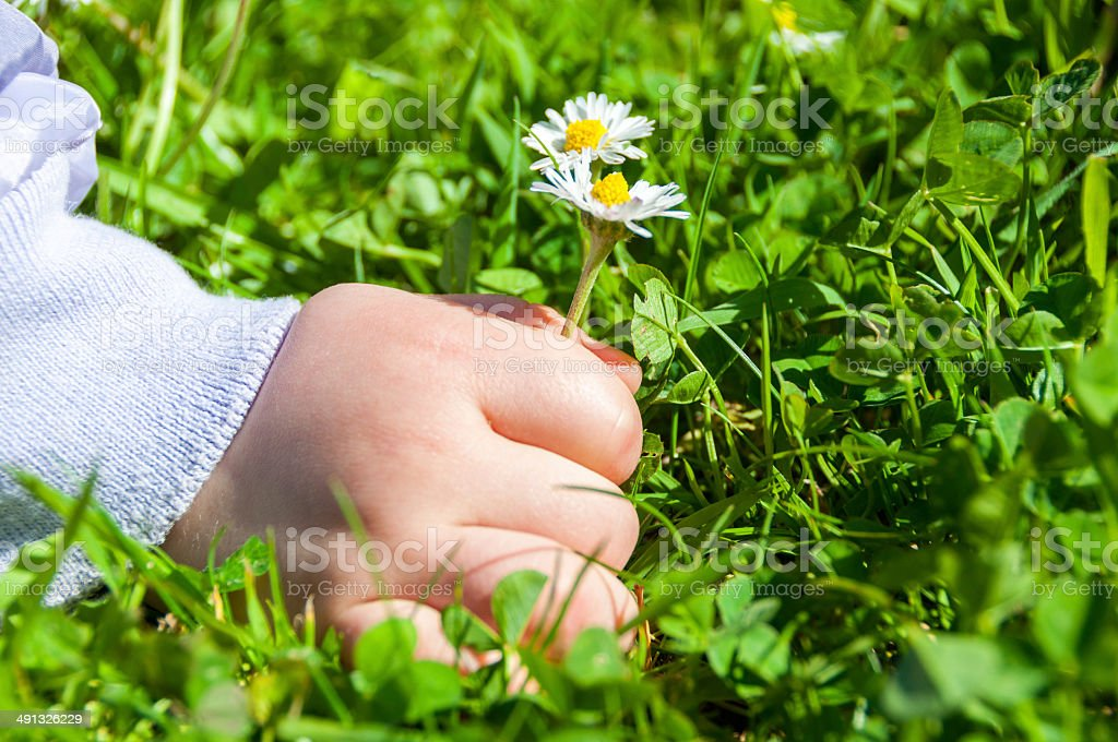 Child Picking Daisies stock photo