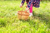 Little girl picking grass for Easter eggs during sunny day.