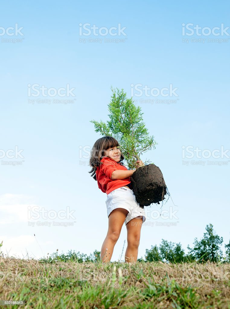 Child planting a tree stock photo