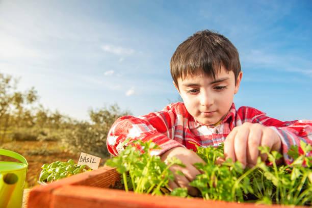 Kind pflanzt aromatische Pflanzen – Foto